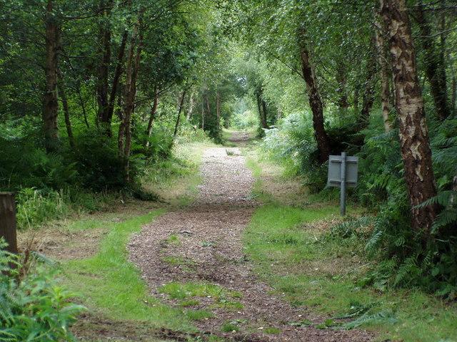 A pathway through Peatlands Park