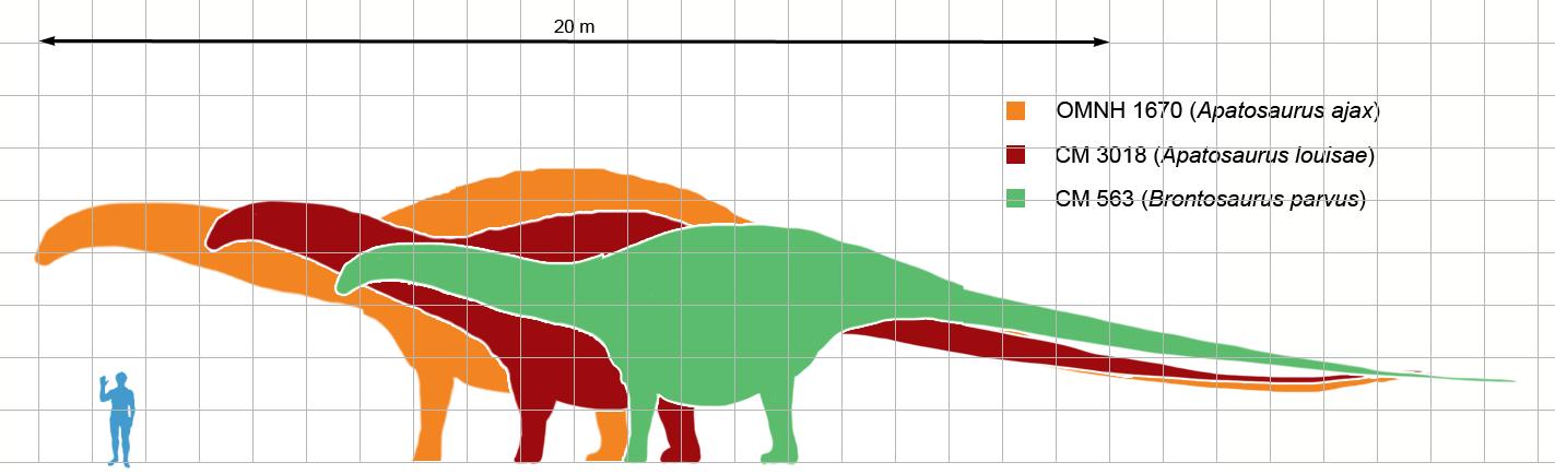 Comparaison Taille Apatosaure