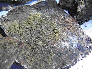 Biodegradation_Vegemat_2mois.JPG