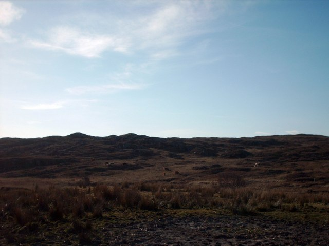 File:Cattle Grazing On The Slopes Of Monadh na Ceapaich - geograph.org.uk - 773358.jpg