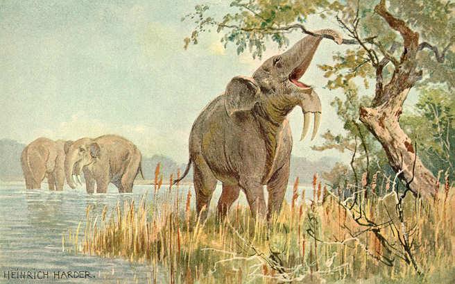 Elefantes Prehistóricos Dinotherium