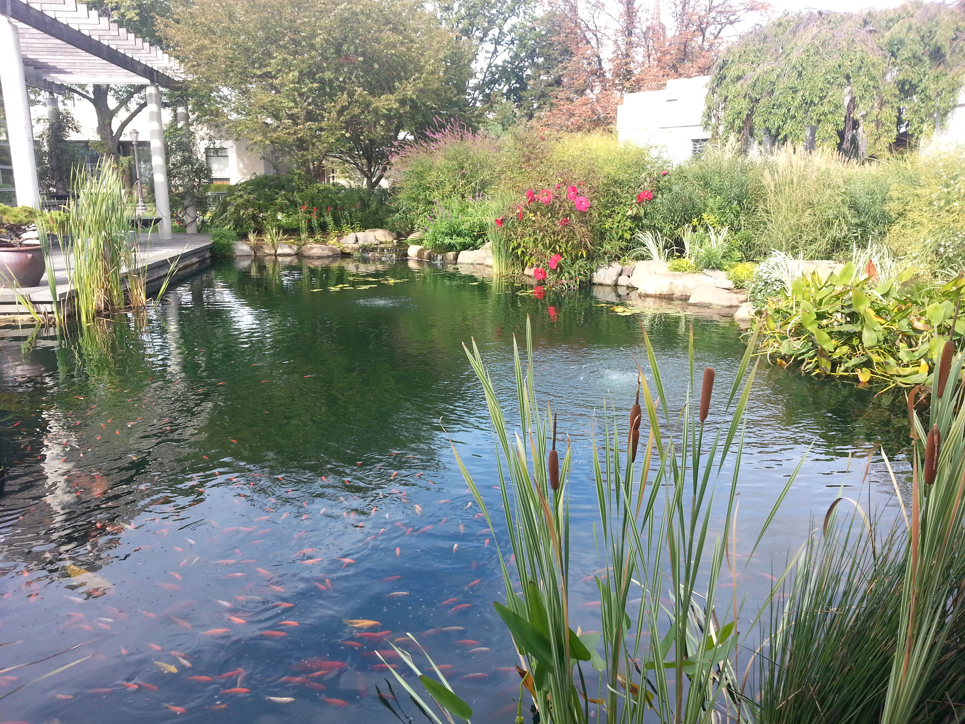 File green wood cemetery tranquility garden koi for Koi pond york