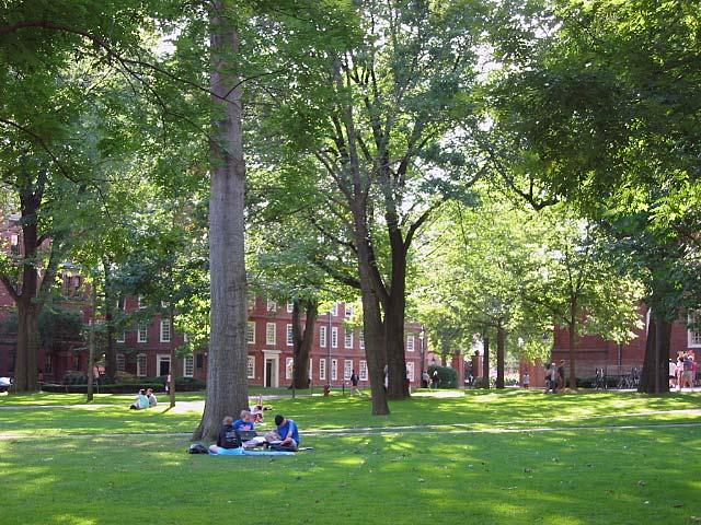 File:Harvard Yard, Dudesleeper.jpg