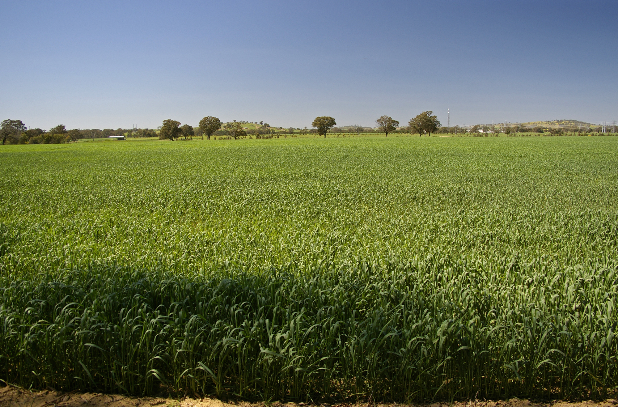 Louisiana Agriculture Food And Natural Resources