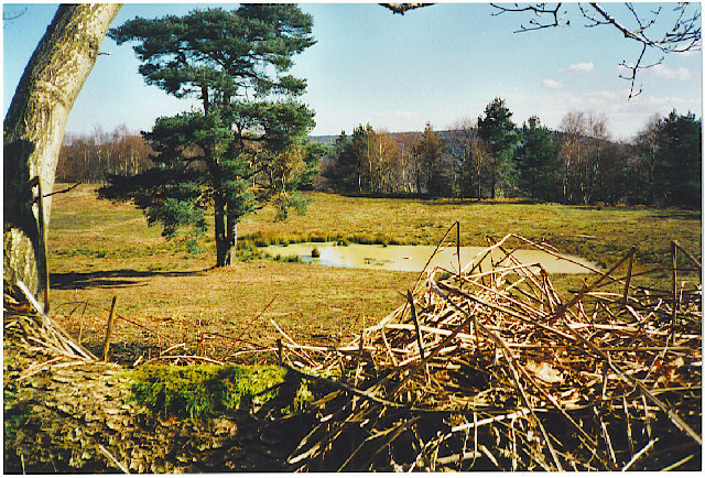 Peaslake United Kingdom  city pictures gallery : Holmbury Hill. A rare pond on top of the mainly dry Greensand Ridge.