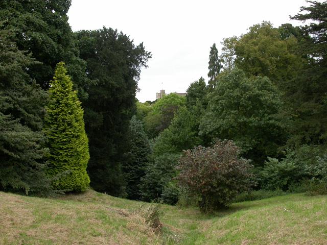 In the Wild Garden - geograph.org.uk - 31761
