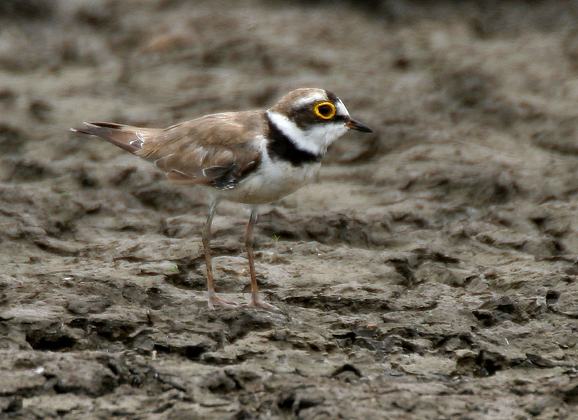 Plover Wi Fast Food