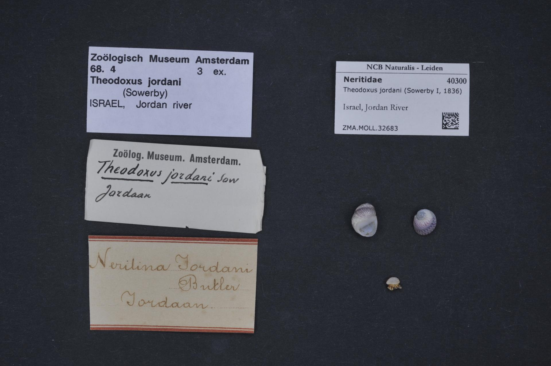 Natural History Notes From H M Indian Marine Survey Steamer Shrimp
