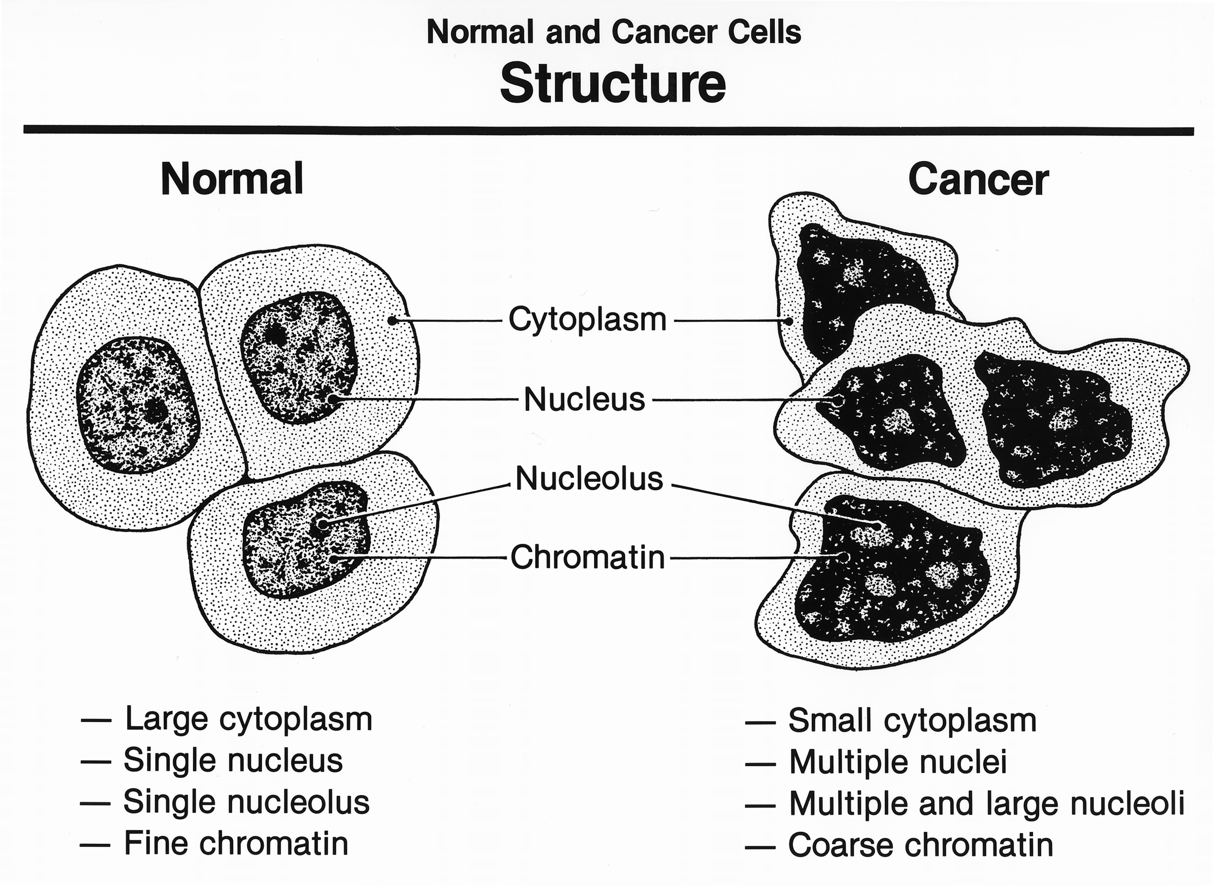 A comparison of tumor and cancer