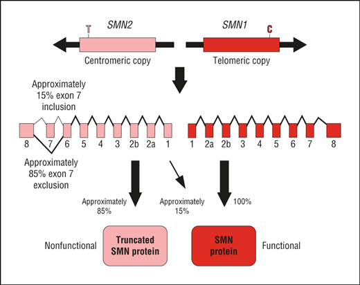 File:Schematic of SMN gene.png