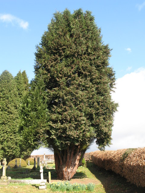 Yew Tree Graveyard