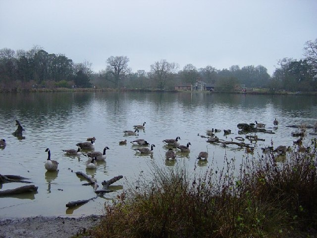 The Lake, Hatfield Forest - geograph.org.uk - 100764