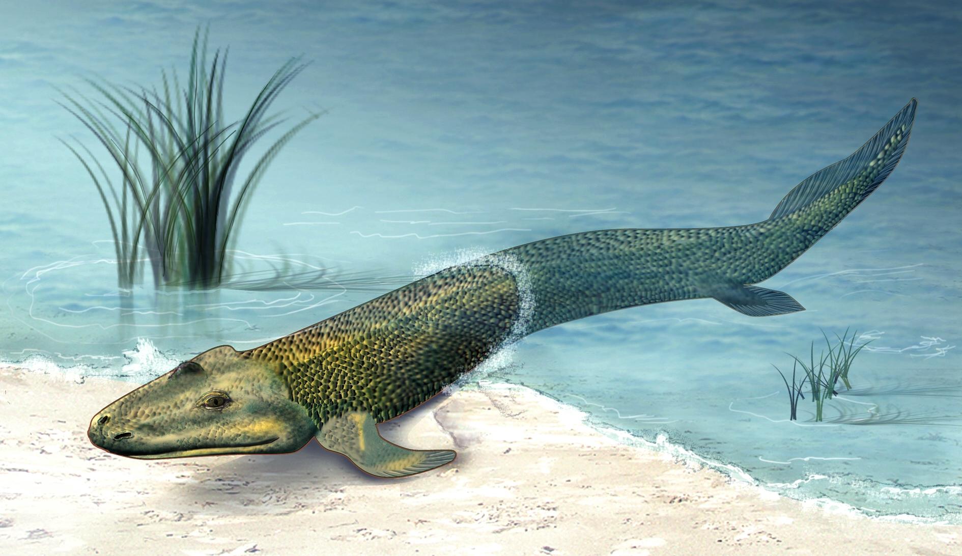 Resultado de imagem para tiktaalik paleoart