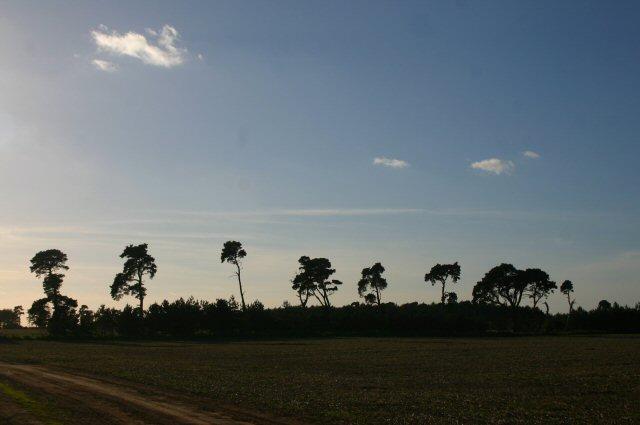 File:Treeline silhouette - geograph.org.uk - 276084.jpg