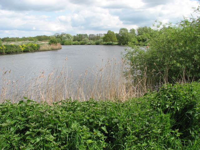 View north along the River Yare - geograph.org.uk - 1285236