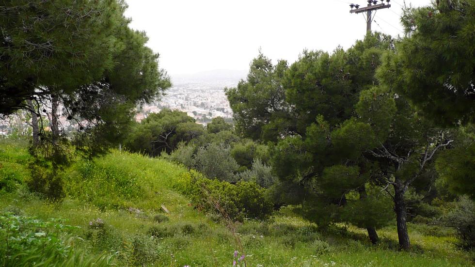 Αποτέλεσμα εικόνας για Δάσους Θεοκλήτου