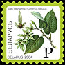 2004. Stamp of Belarus 0558.jpg