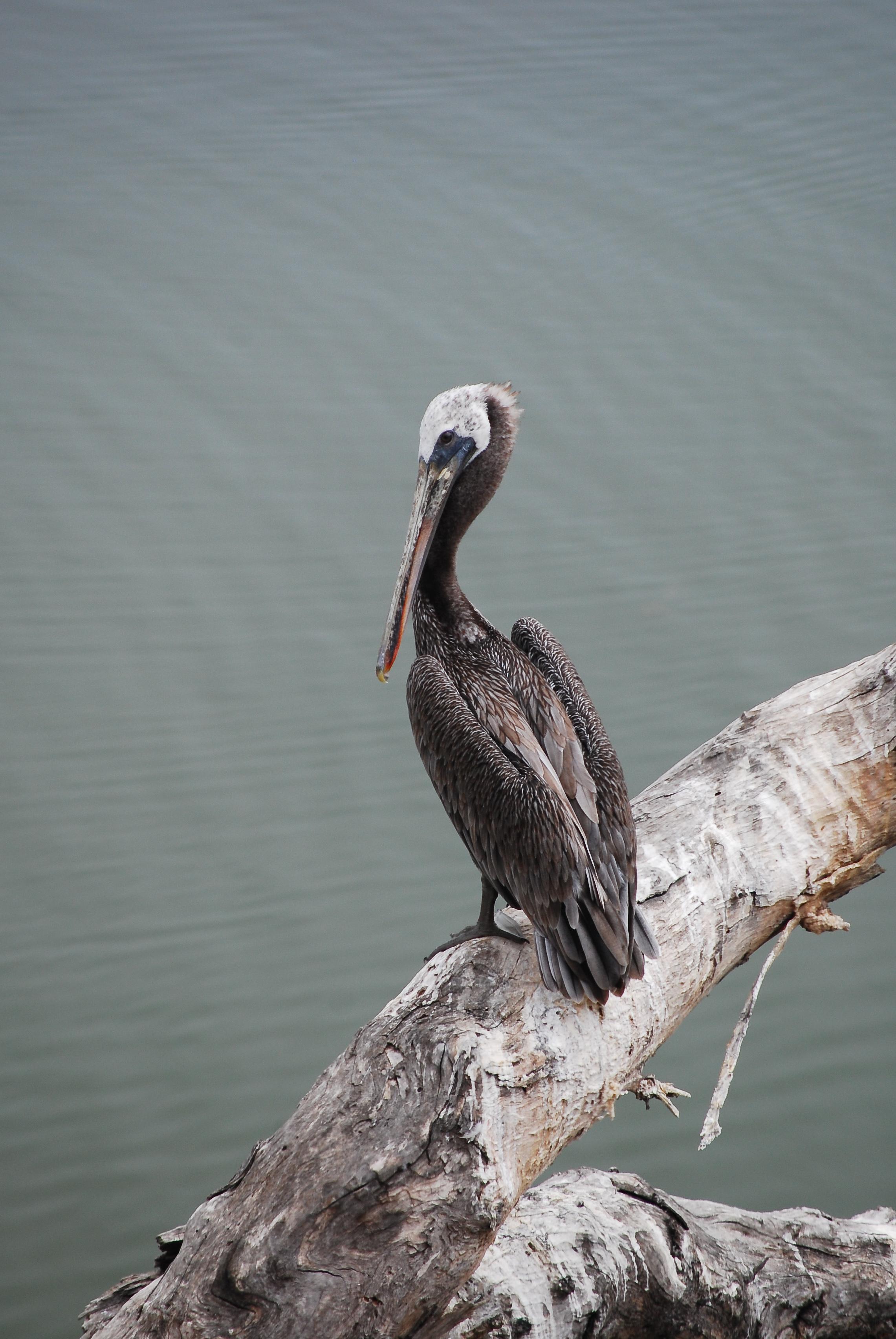pelican rapids adult sex dating Mature dating, free adult dating sex, adult hookup sites free:  top free dating sites for hooking up pelican rapids 56572 women hookup markleville 46056.