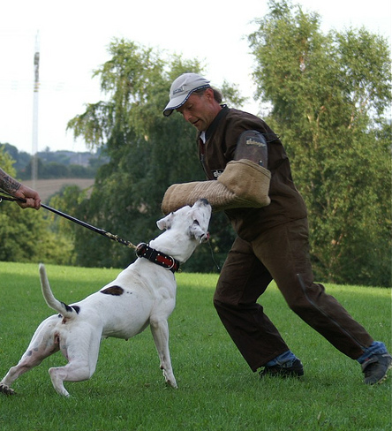 Personal Protection Dog Breeds
