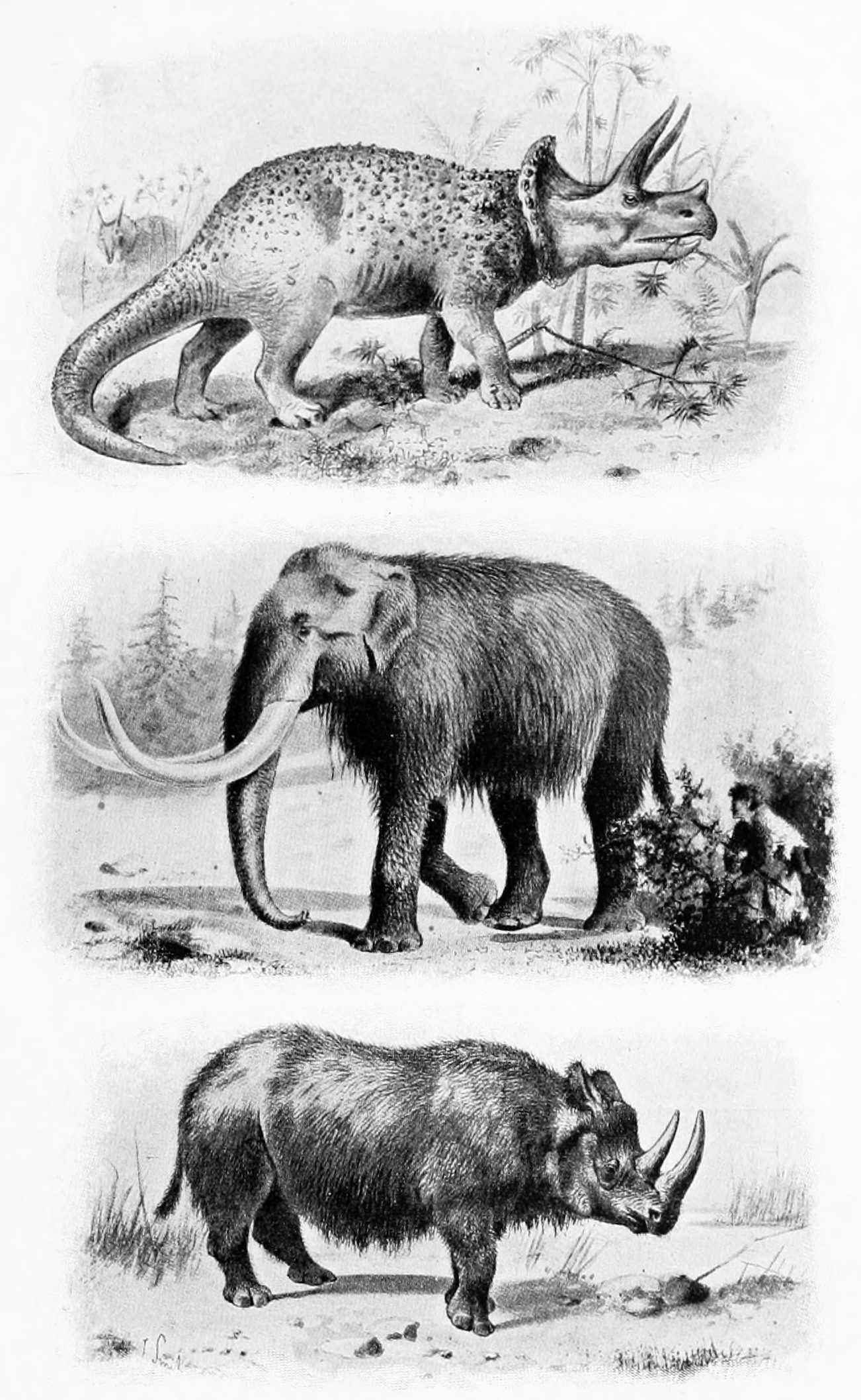 Ancient animals from Centennial History of Oregonpng