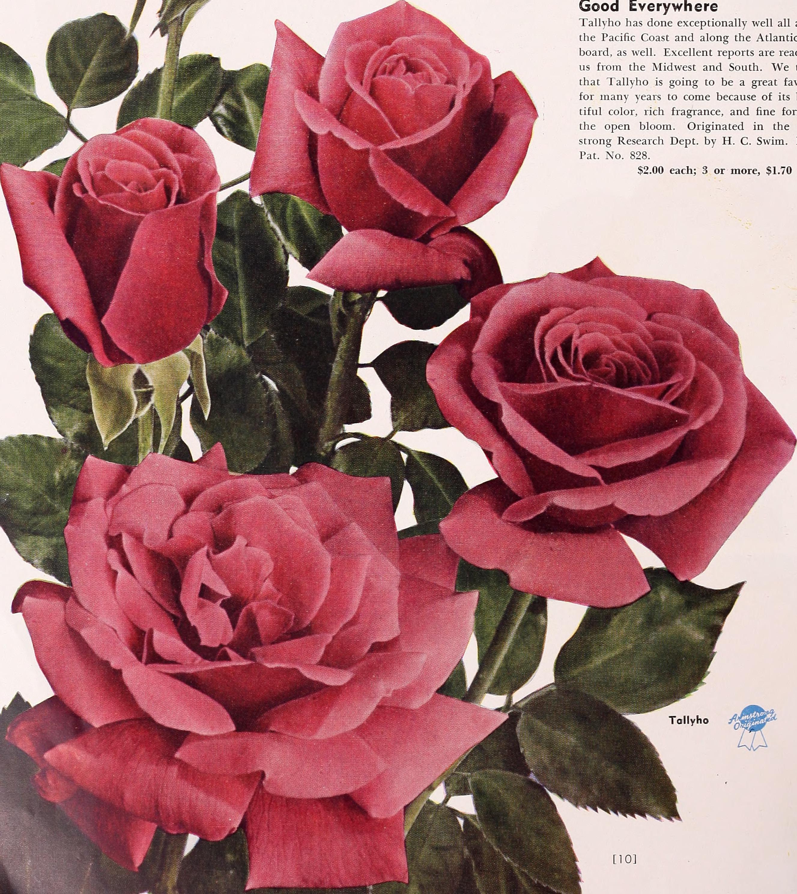 File Armstrong Nurseries 1950 20177894248 Jpg