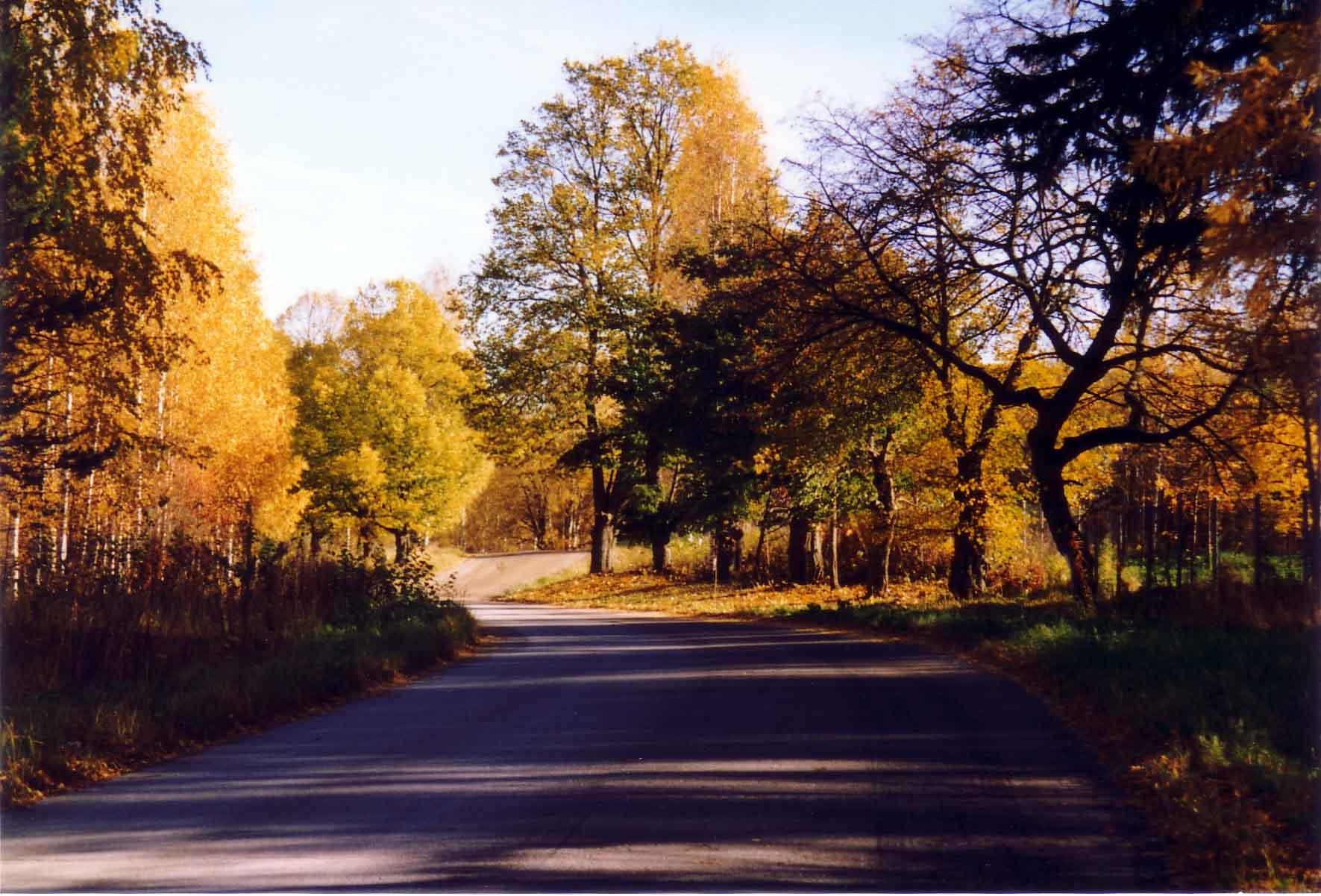 Ficheiro Autumn Trees Jpg Wikipedia A Enciclopedia Livre