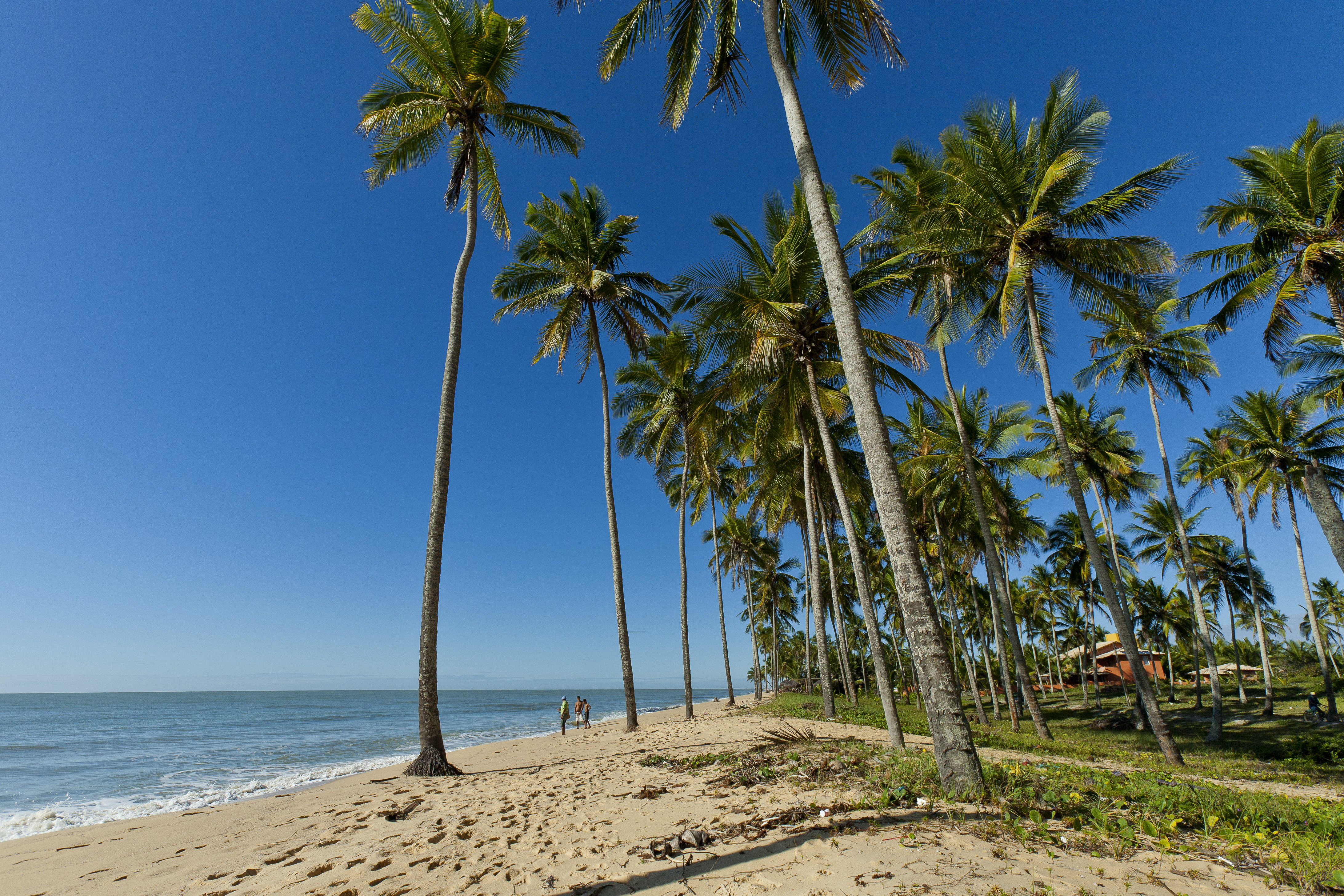 Prado Bahia fonte: upload.wikimedia.org