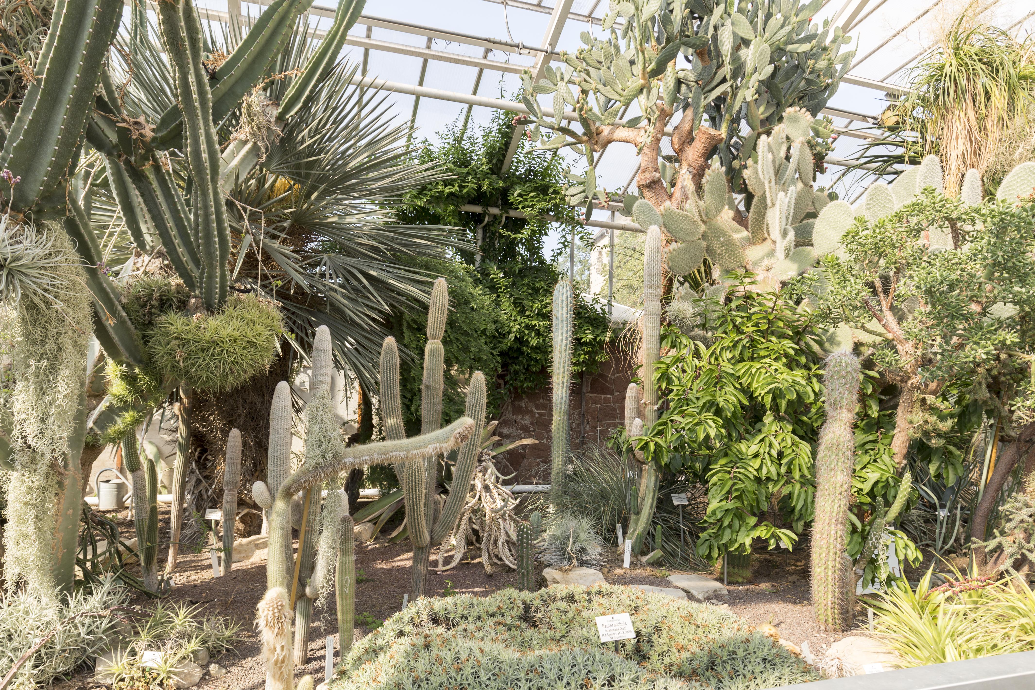 File Botanischer Garten In Halle Saale Im Sukulentenhaus