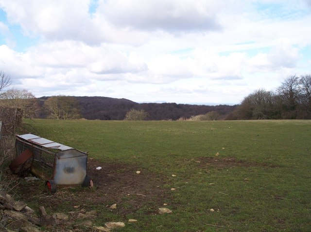 Cranham Wood - geograph.org.uk - 130409