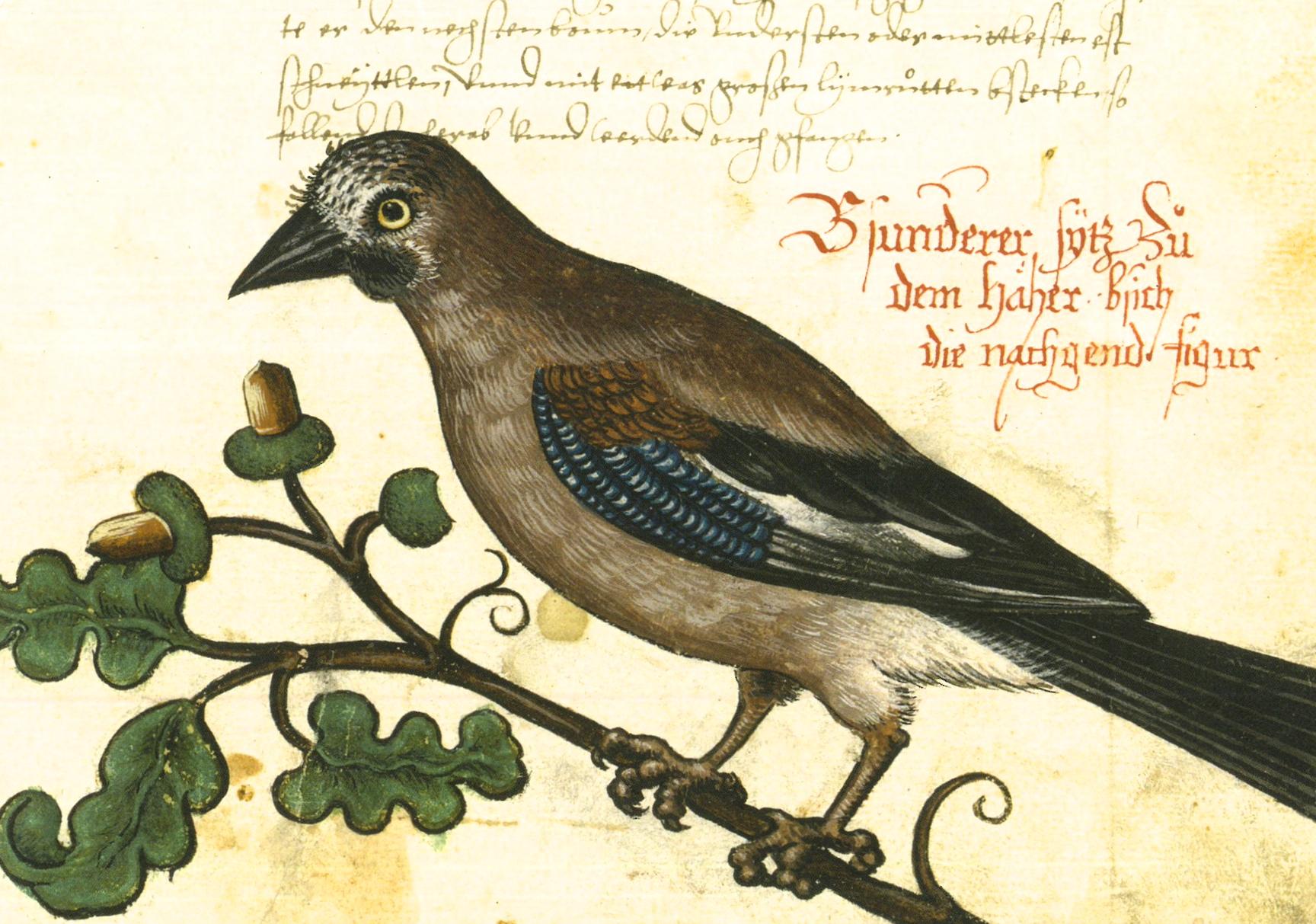 vogelbuch online dating