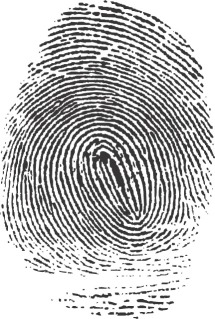 A fingerprint created by the friction ridge structure. Fingerprintforcriminologystubs2.png