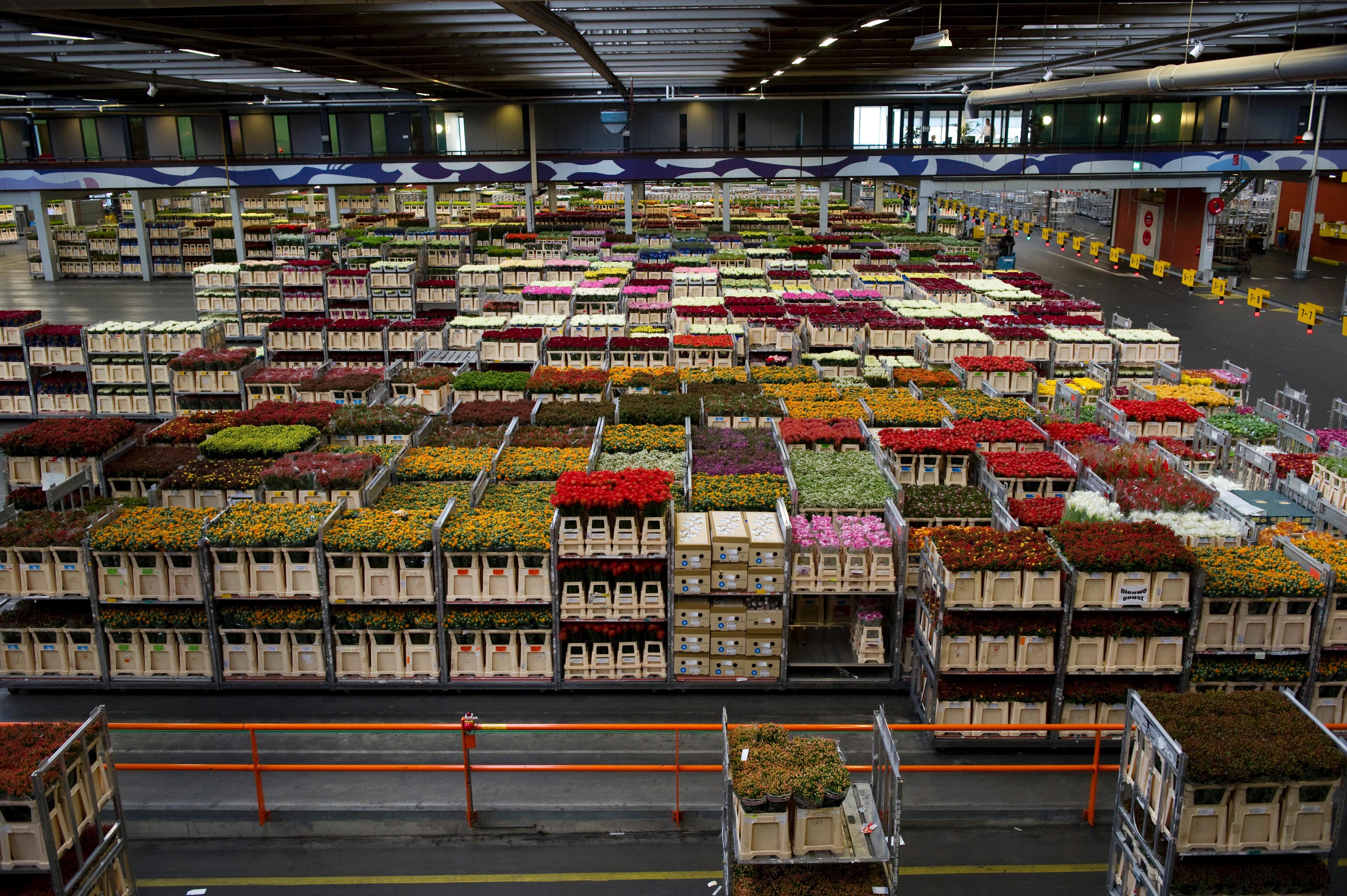 Bursa de flori Olanda