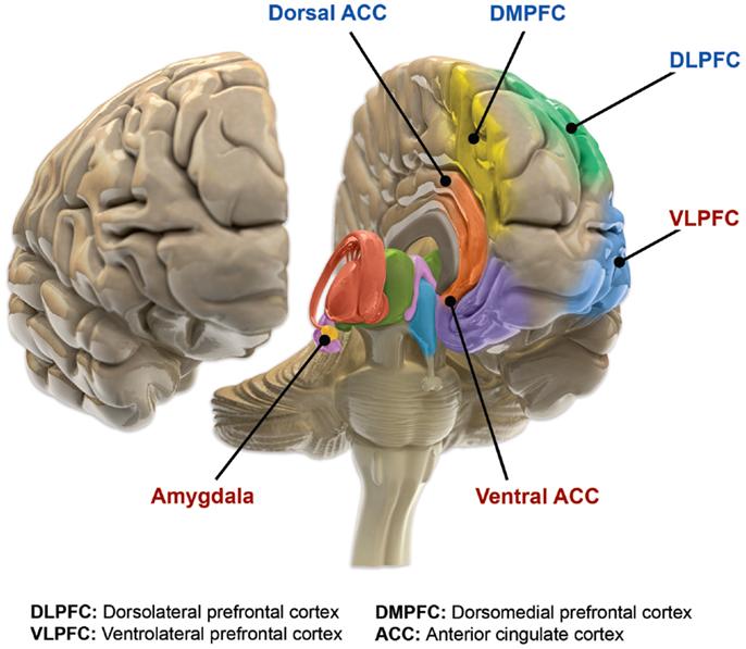 Biology of bipolar disorder - Wikiwand