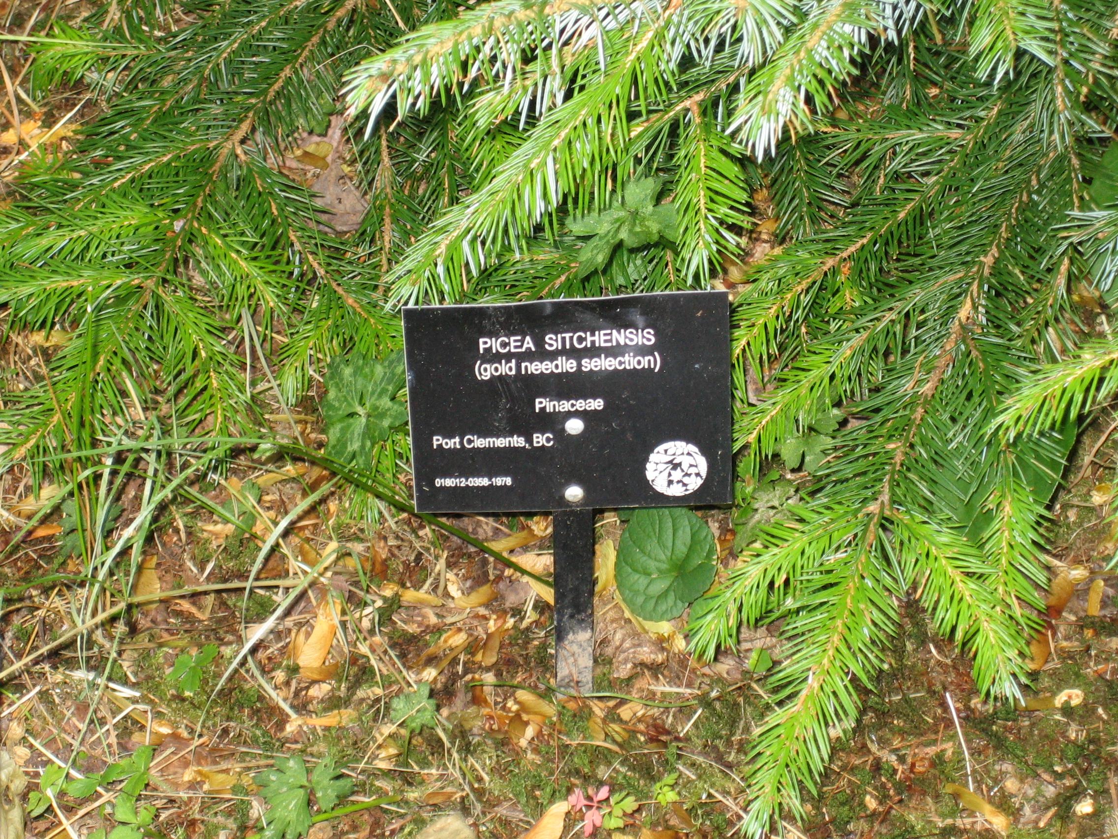 UBC Botanical Garden Aug