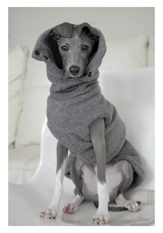 File:Italian Greyhound in dog clothing.jpg - Wikimedia Commons