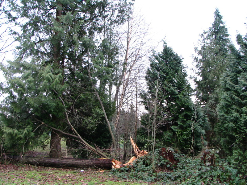 FileKensington Park After Historic WindstormJPG