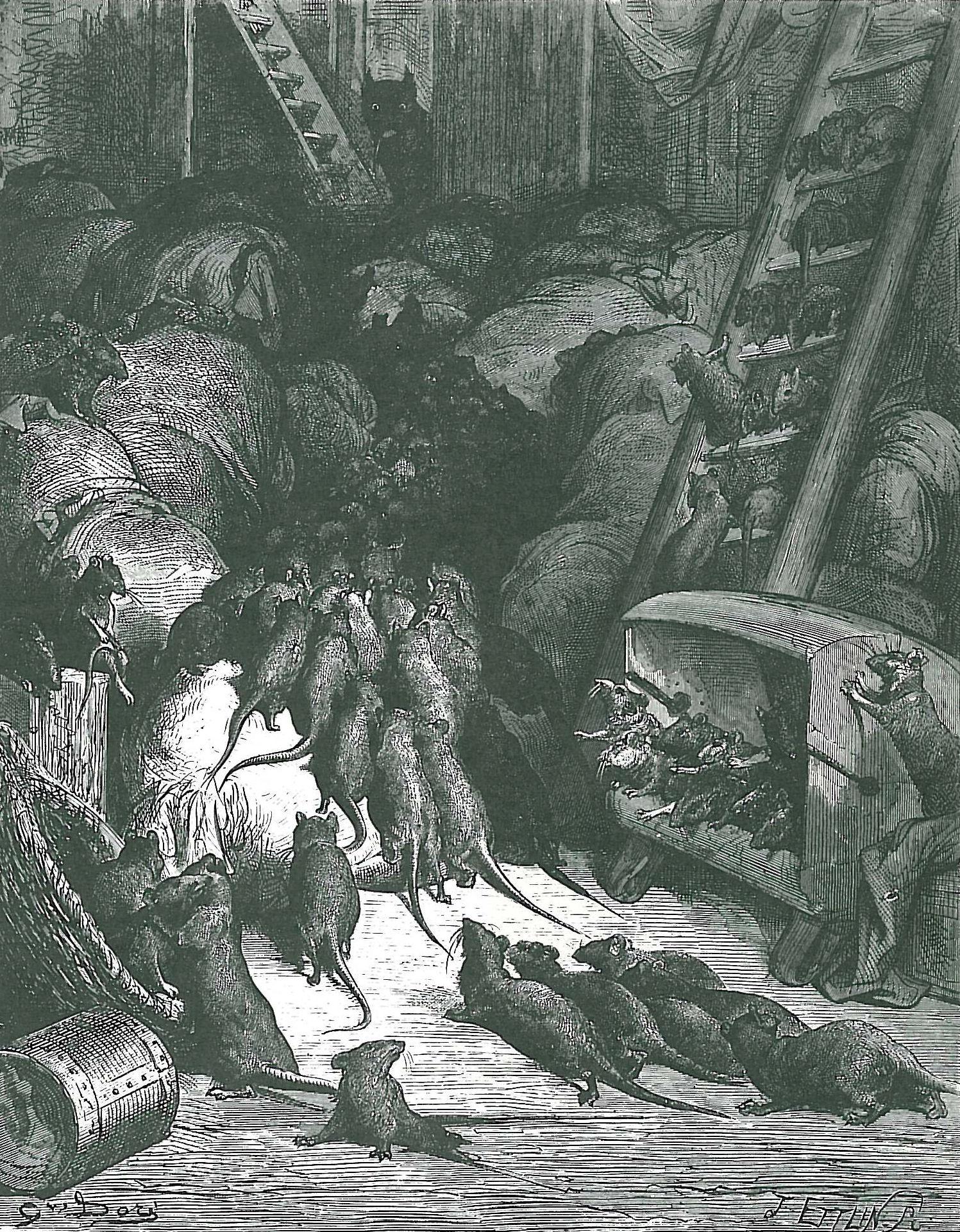 cellar rats