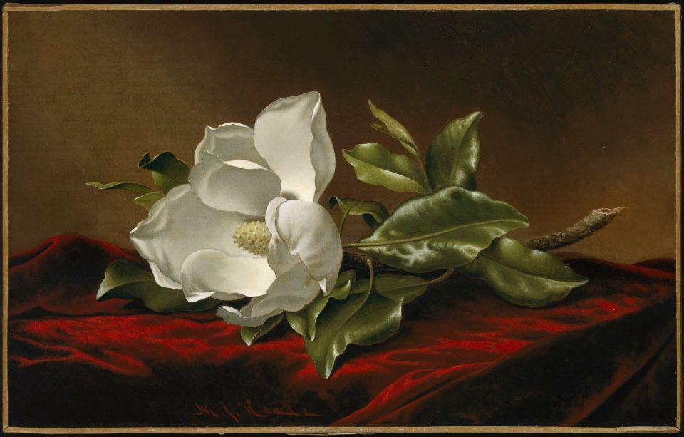 MJ Heade Magnolia Grandiflora 1885-1895.jpg