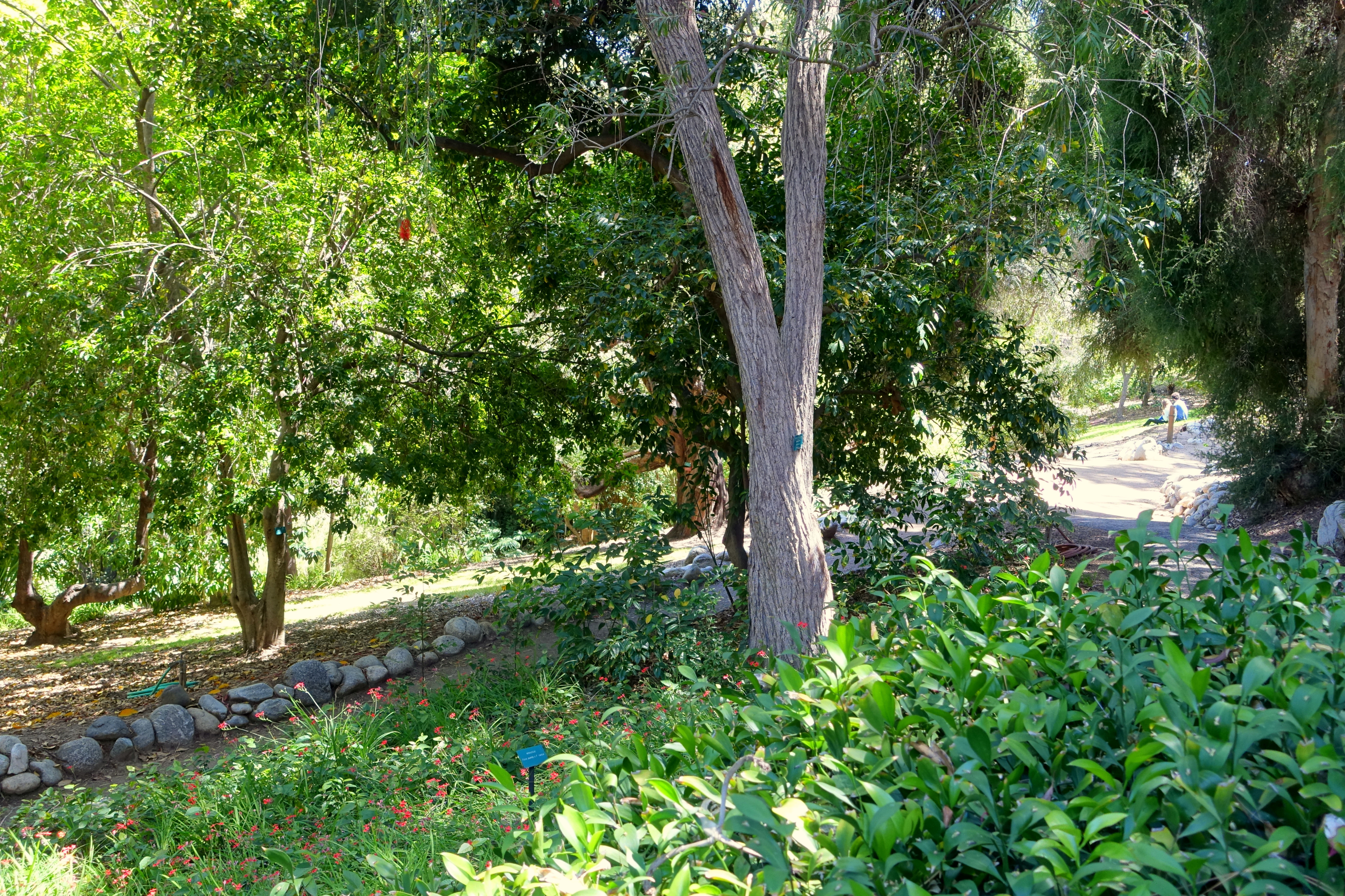 File Mildred E Mathias Botanical Garden University Of