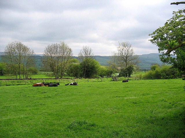 Pasture on footpath from Leyburn to Wensley - geograph.org.uk - 807053