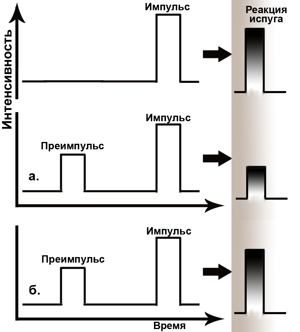 File:Prepulse Inhibition schematically rus.png - Wikimedia Commons on