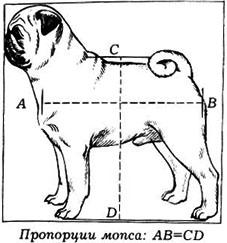 Пропорции мопса