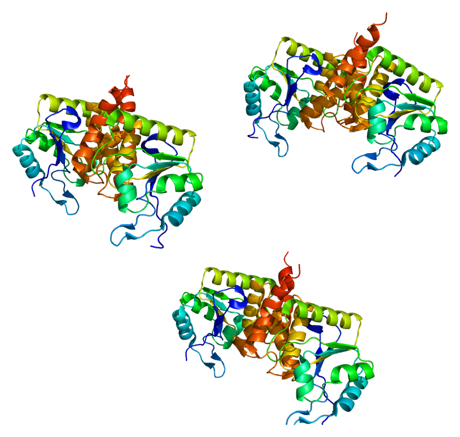 Depiction of CDKN3