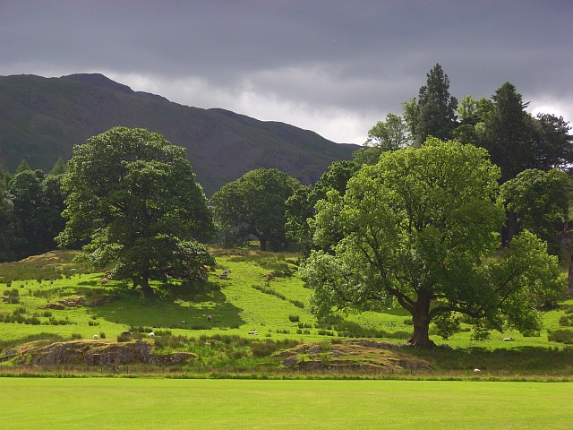 Scattered woodland, Patterdale - geograph.org.uk - 858835
