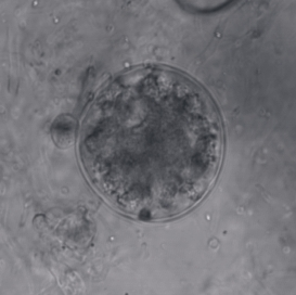 Chytridiomycota division of fungi