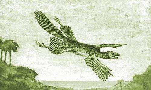 SUJET PHARE : EVOLUTION OU CREATION ? 2eme PARTIE  - Page 37 Tetrapteryx