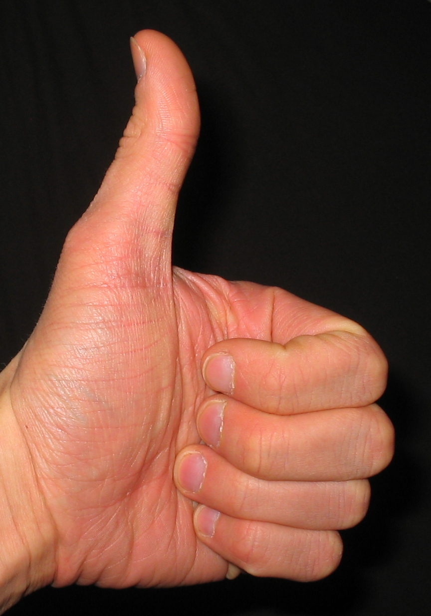 length of thumb