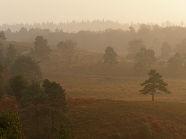 File Valley Between Acres Down And Wick Wood New Forest