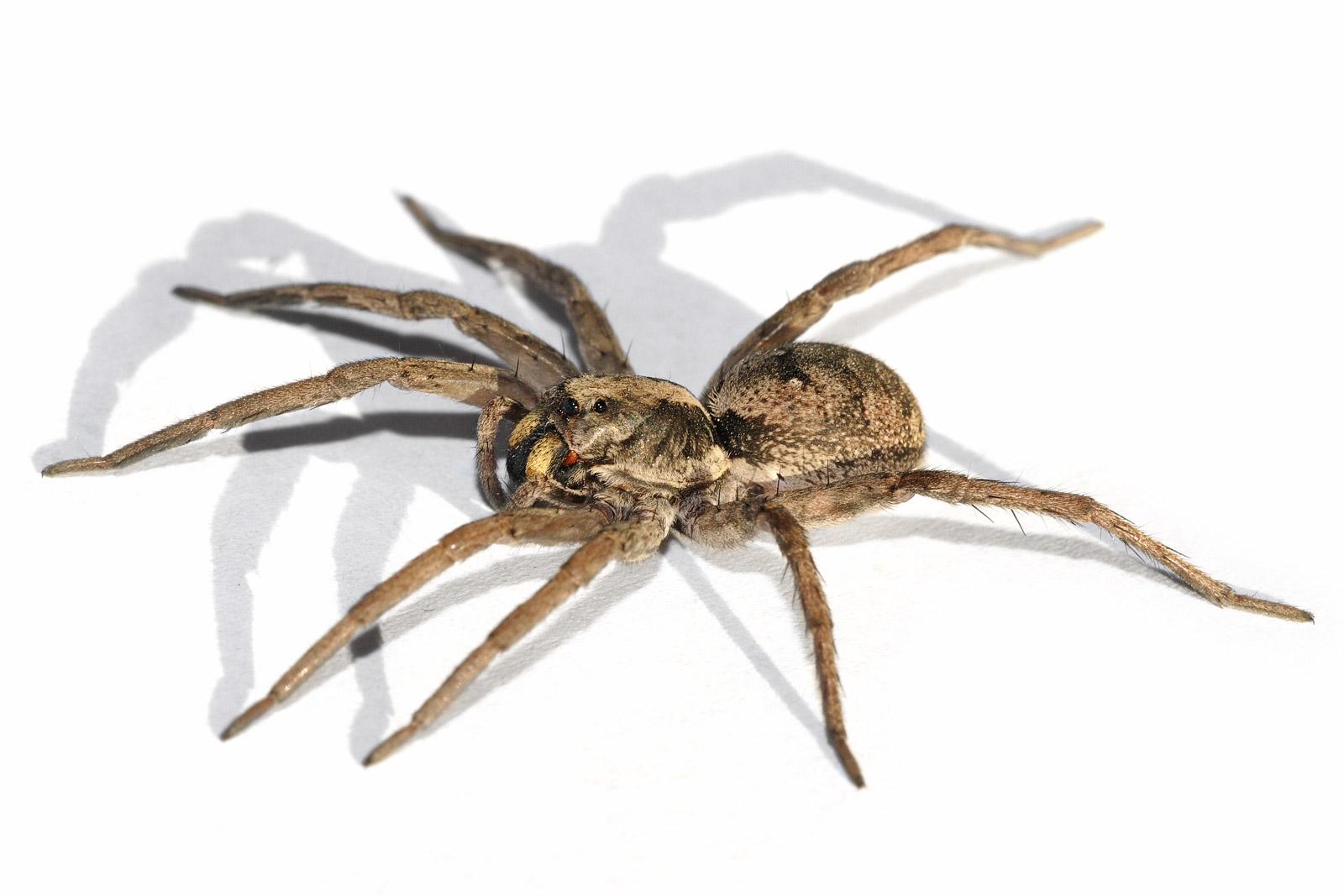 Image Result For Spider Killing Spray