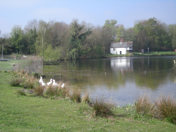 A small corner of Cole Mere - geograph.org.uk - 1261049